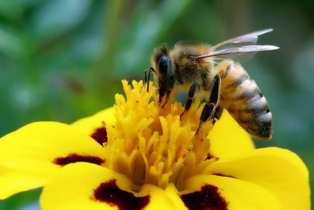diventare apicoltore 1